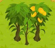 Three Mango Trees
