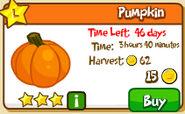 IP Pumpkin crop 46 days 2011
