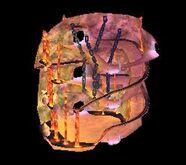 Lair T6 Lunus Chamber - Lair