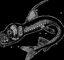 Dragonfishh