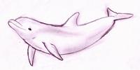 Greek Dolphin