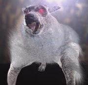 File:Devil dog.jpg