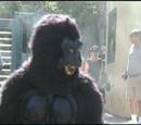 Day Monkey At Zoo