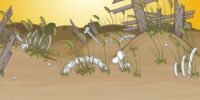 Boneyard Dunes