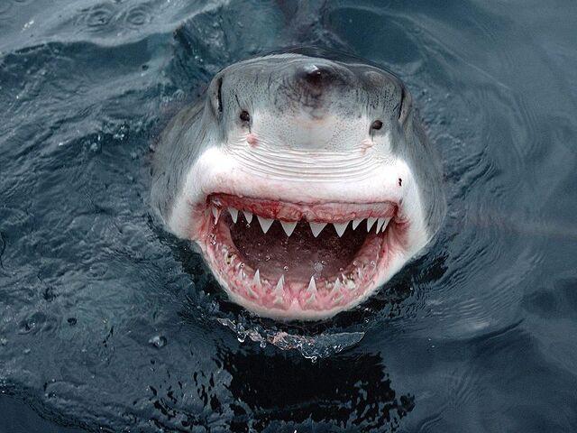 File:Jaws1.jpg