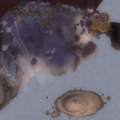 Pirate's Cove map.png