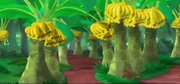 Banana grove03