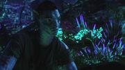 Bioluminescent beauty2