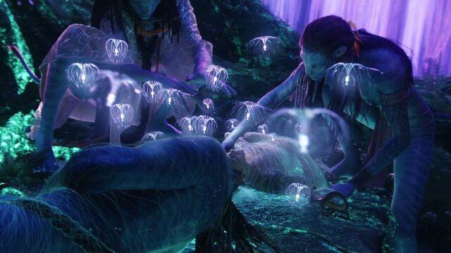 File:Avatar-avatar-12322129-1280-720.jpg