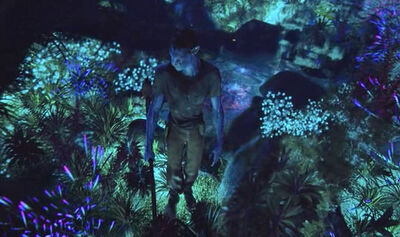 Jake and bioluminescence