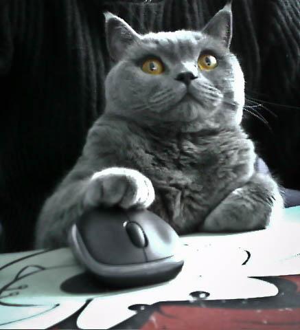 ファイル:Catmouse.jpg