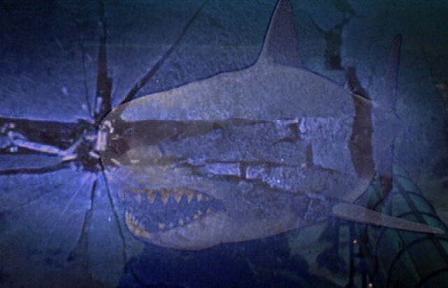File:Great White Shark from Jaws III.jpg