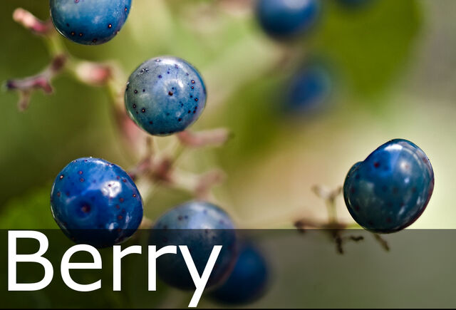 File:Berry caption.jpg