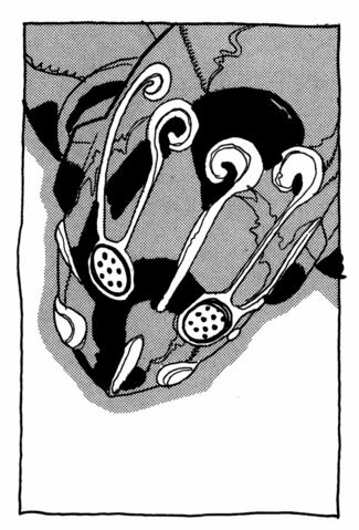 File:Chapter 406 Tailpiece.png