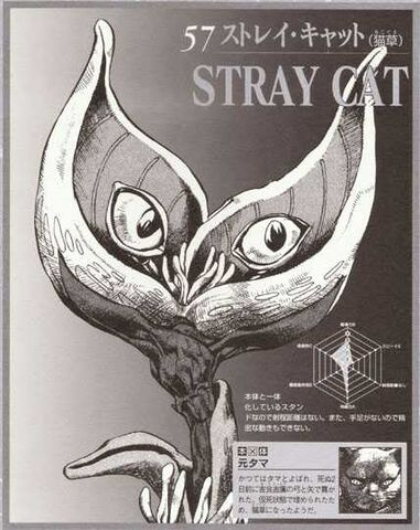 File:StrayCat.jpg