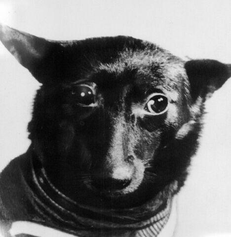 File:Cute doge.jpg