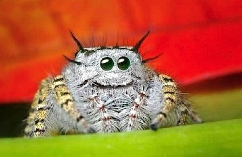 File:Cute-spider-6062-1231867814-3.jpg