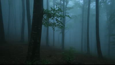 File:Stock-footage-foggy-forest-with-rain-drops-sound.jpg