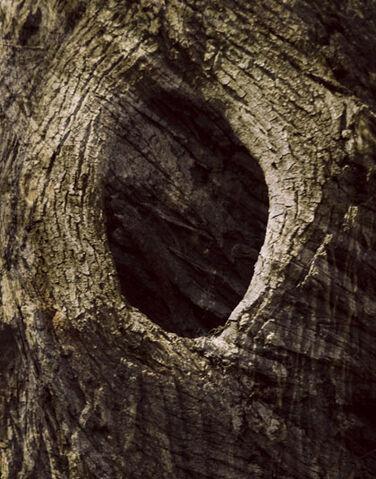 File:Treehole.jpg