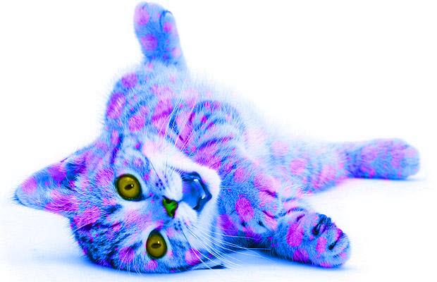 File:Blueandpinkcat.jpg
