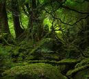 Deeper Forest