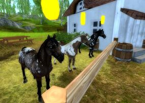Newest Paint Horses on Star Stable Online