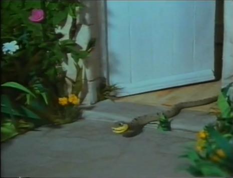 File:Snake 2.JPG