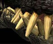 Liopleurodon teeth