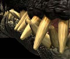 File:Liopleurodon teeth.jpg