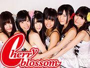 20130516 cherry blossom 01