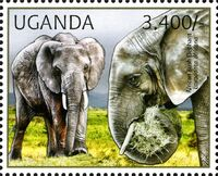 Uganda 2012 Fauna of African Great Lakes Region - African Elephant - African Bush Elephant a