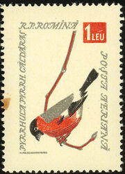 Romania 1959 Birds h