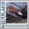 Netherlands 2011 Birds in Netherlands a13.jpg