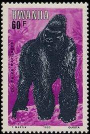 Rwanda 1983 Mountain Gorilla g