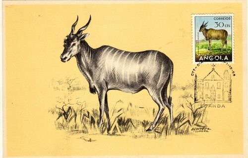 Angola 1953 Animals from Angola x