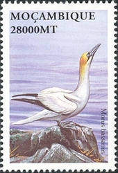 Mozambique 2002 Sea Birds of the World n