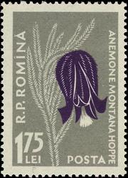 Romania 1957 Carpathian Mountain Flowers h