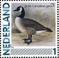 Netherlands 2011 Birds in Netherlands a19.jpg