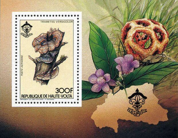Burkina Faso 1984 Scouting and Fungi k