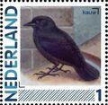 Netherlands 2011 Birds in Netherlands a28.jpg
