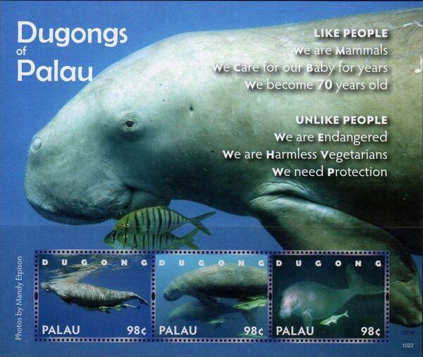 Palau 2011 Dugongs of Palau f
