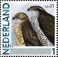 Netherlands 2011 Birds in Netherlands a23.jpg