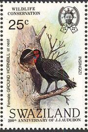 Swaziland 1985 WWF Southern Ground Hornbill (Audubon birth bicentenary) e