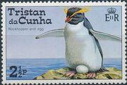 Tristan da Cunha 1974 Rockhopper penguins a