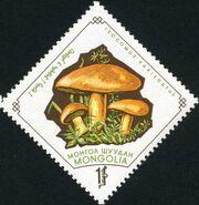 Mongolia 1964 Mushrooms h
