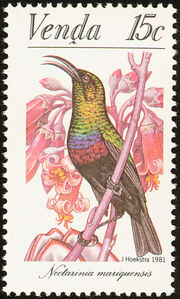 Venda 1981Sunbirds b