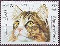 Afghanistan 1997 Cats a.jpg