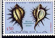 Angola 1974 Sea Shells b