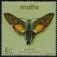 Malta 2002 Butterflies and Moths j