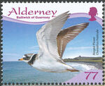 Alderney 2009 Resident Birds Part 4 (Waders) f